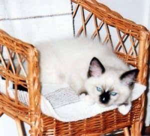 Jaska as a kitten