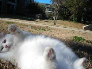 Rachel's Floppy Cat, Chubby Charles!