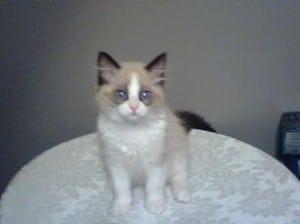 Takoda - 4 Months Old