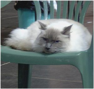 King in 2003 at his last cat show