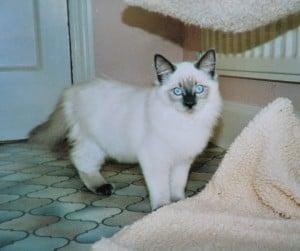 King as a kitten in England
