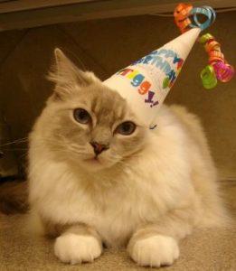 Happy 1st Birthday, Trigg!