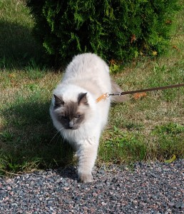 King on a leash