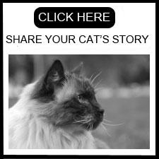 blog.floppycats.com