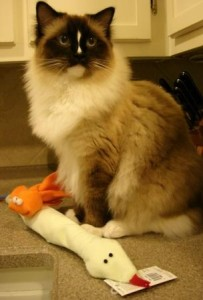 Charlie with Cat 'n Around Toys from Imperial Cat