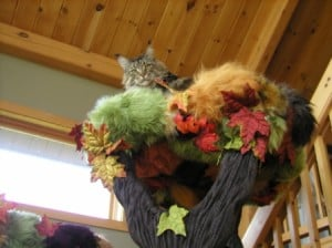 dick fhbx 300x224 A Fantasy Forest   The Ultimate in Cat Trees