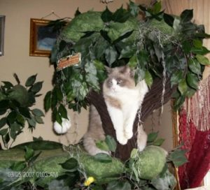 pets 958  2  jpgbaloo 300x272 A Fantasy Forest   The Ultimate in Cat Trees