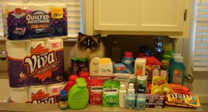 Charlie with my haul in December 2010