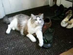 Summer Fall 2010 - Clio loves shoes and empty boxes