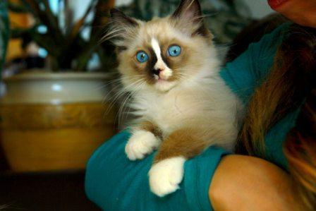 Doctor Zulu as a kitten
