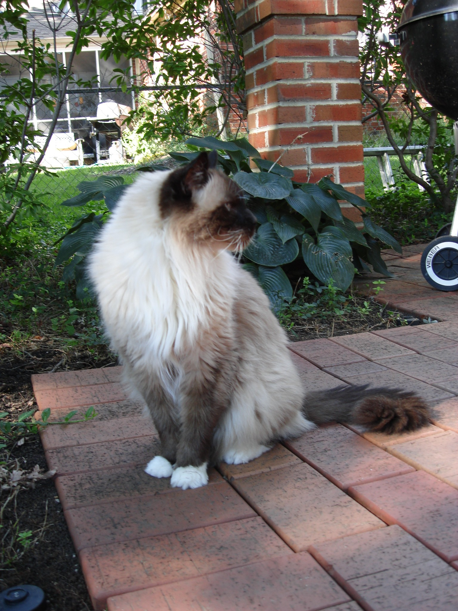 products to remove cat urine from concrete
