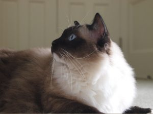 Caymus' Whiskers ©Amy Dean 2010