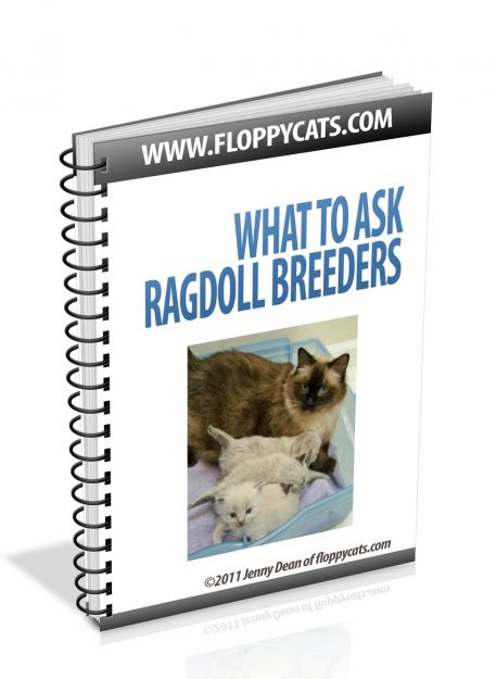 What to Ask Ragdoll Breeders