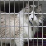 Pet Rescue and Transportation Groups