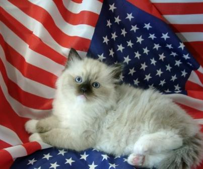 Floppycats Wishes You a Happy 4th of July! (Even You Non-Americans)