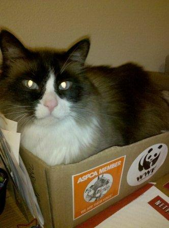 """Reader Jana O'Grady said, """"Here's Hunter watching me work. He stays in this box ALL day long. The box even made a move with us from NC to NY."""""""