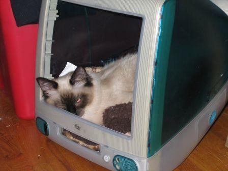 Stella in a Computer Box