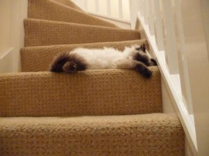 Mr Darcy as a kitten sleeping