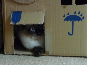 Darcy playing hide and seek