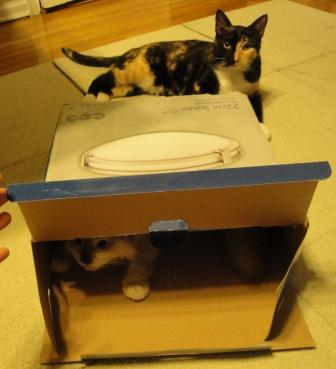 Tonks and Taro in a Box