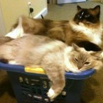 Trigg and Charlie in a Laundry Basket 8-19-11