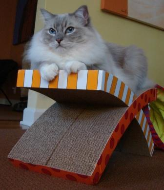 Petstages Easy Life Hammock And Scratcher Review By