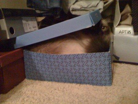 Hank in a Box