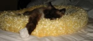 Rags in his yellow bed that he always slept in the basement