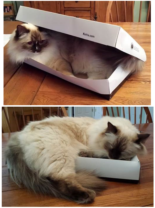 Blaze is getting ready for his nap in this Kohl's box. His new favorite place to sleep. Chet prefers to sleep on top of his Kohl's box. He naps here all the time. Both loved by Arlyne