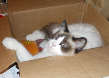 Nicky in a box owned by Joan Frost