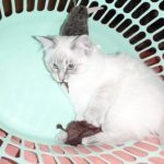 Schiska in a Laundry Basket Owned by Sharon de Vos