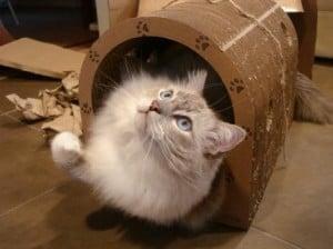 Trigg in the The Original Catpods