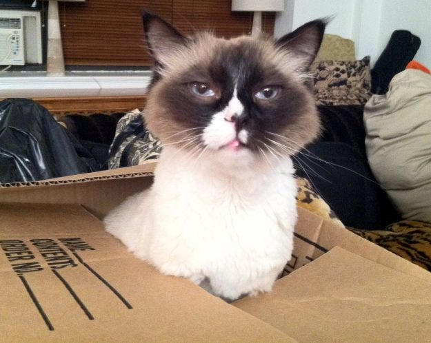 Wendell (sporting a lion's cut) in a Box loved by Laura Vitale