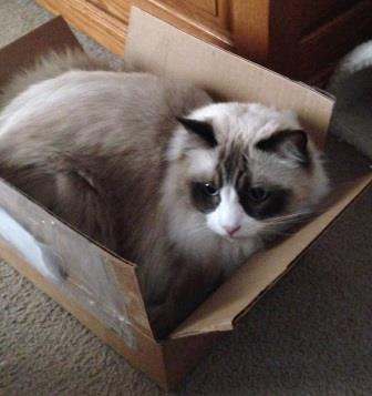 Zander in a box loved by Deanna Downs