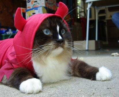 Charlie in Kmart Cat Halloween Costume - Totally Ghoul Devil Pet Costume