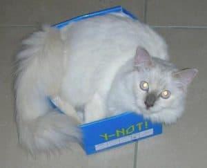 Cleo in a box