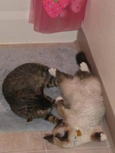 Caramel and Peppermint Playing
