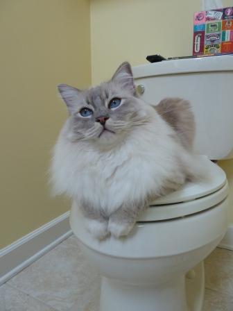 Chiggy Toilet God