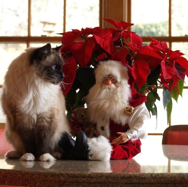 Rags and Santa - Christmas 2007 Photo ©2007 Amy Dean