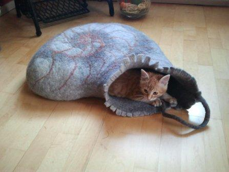 cat cave with snail shell