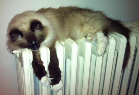 Maddie on Radiator Does Your Cat Lay on the Radiator?