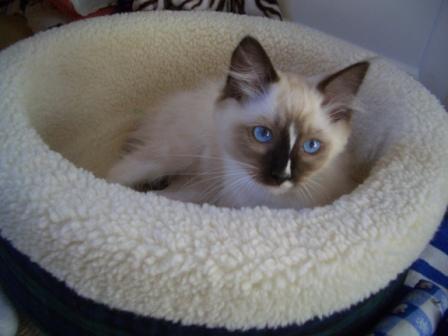 Murphy as a kitten
