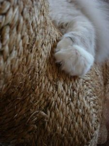 Trigg's paw on the K9 cat scratcher