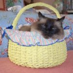 Happy Ragdoll Cat Easter!