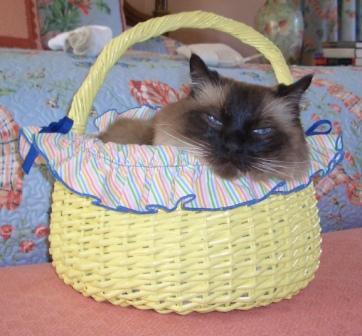 Happy Ragdoll Cat Easter