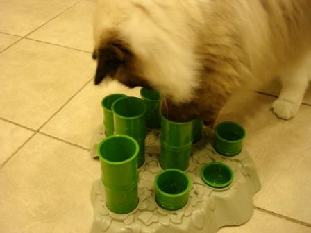 ... Stimulo Cat Feeding Station and Interactive Cat Toy Product Review