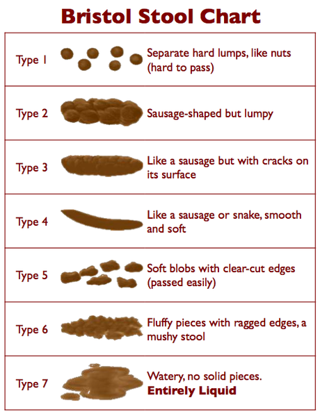 Bristol Stool Chart Cat Constipation   Causes, Symptoms & Treatment of Constipation with Dr. Jean Hofve