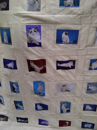 Ragdoll Cat Dream Team Quilt for The Ragdoll Congress