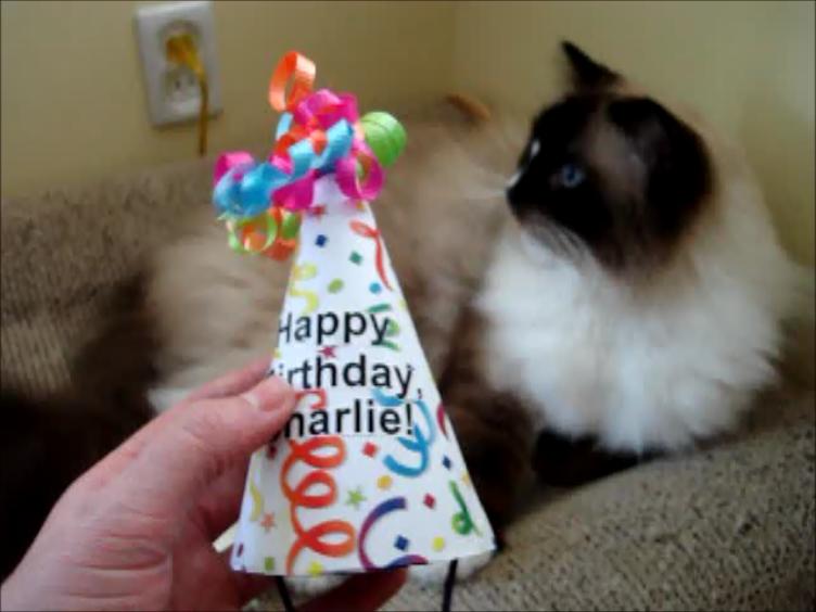How To Make A Cat Birthday Hat