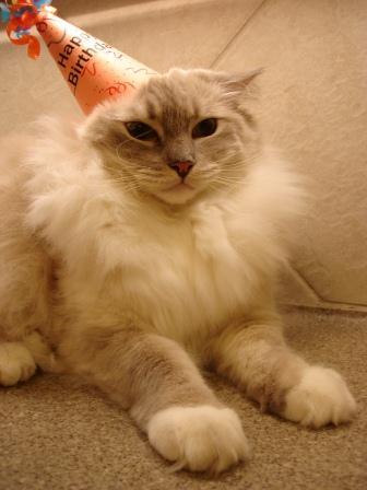 Chiggy I hate birthday hats